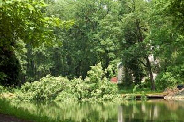 Trebišovský mestský park je nebezpečný - kvôli silnému podmočeniu a padajúcim stromom - jeden skončil rovno v jazierku pri mauzóleu.
