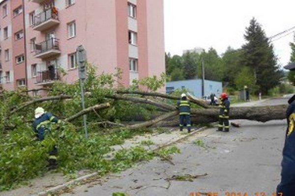 Spadnutý strom v Handlovej.