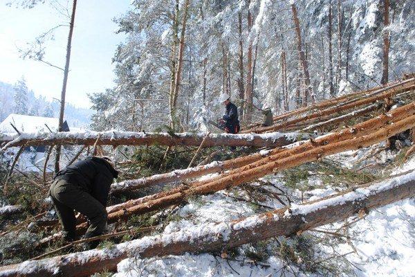 Dobrovoľníci pri rezaní spadnutých stromov.