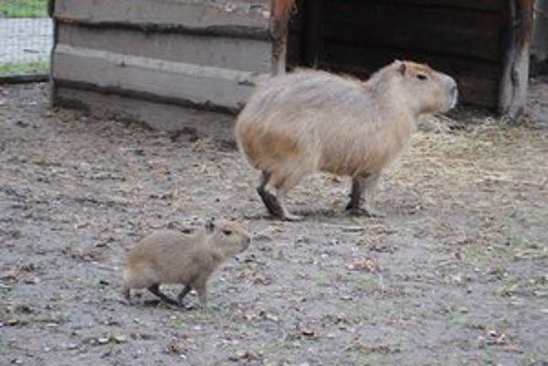 V zoo prišli na svet tohto roku mnohé mláďatká.