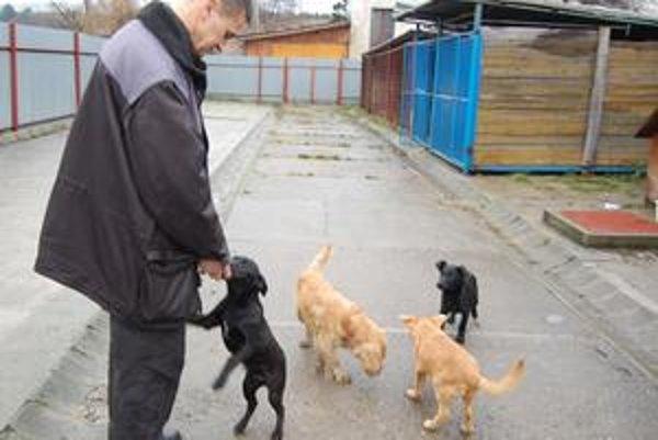 Odchyt. Na stanici sa dnes nachádza pätnásť psov. Živý vianočný darček by potešil nejedno dieťa.