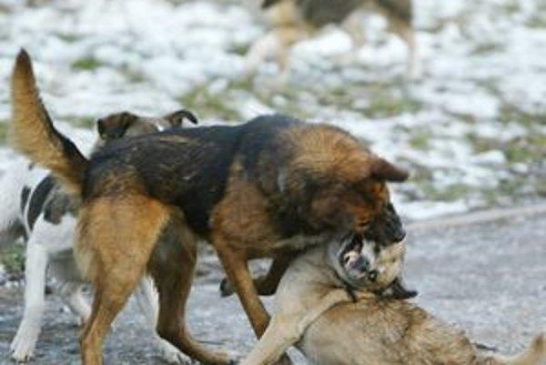 Túlavé psy spôsobujú problémy v mestách aj obciach.
