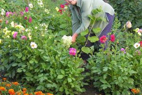 Pýchou Rozálie Košovej sú farebné kvetinové záhony.
