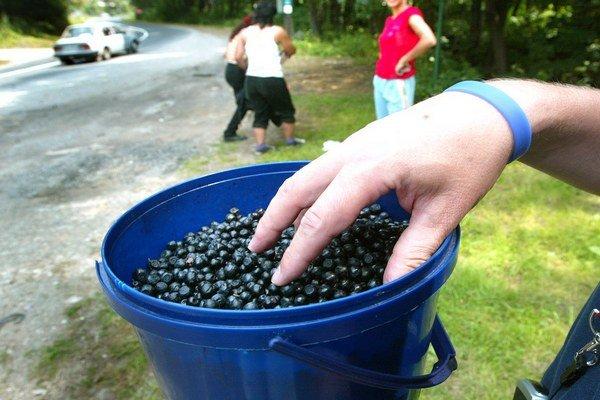 Nazbierané lesné plody predávaú zberačí popri cestách.