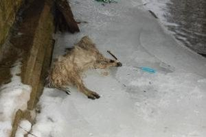 Pes. Dobitý ležal pod mostom.