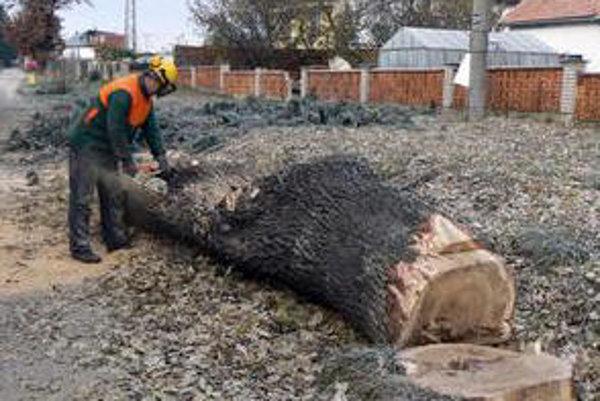 Elektrárne zrezali niekoľko desiatok stromov.