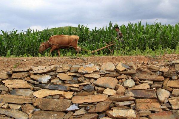 Farmári do Európy neprišli z krajín úrodného polmesiaca.