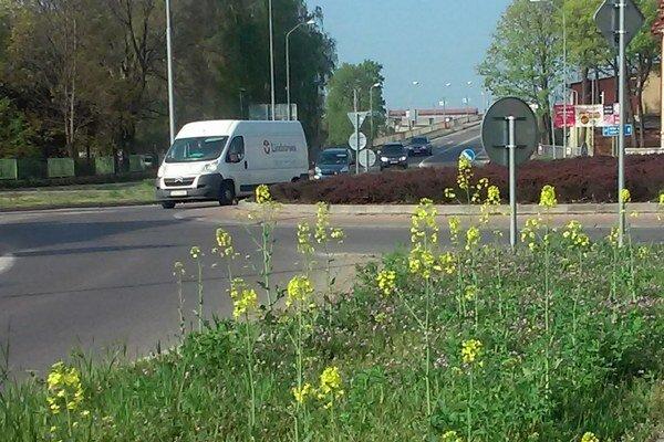 Poznáte tieto kvety? Je to repka olejná.