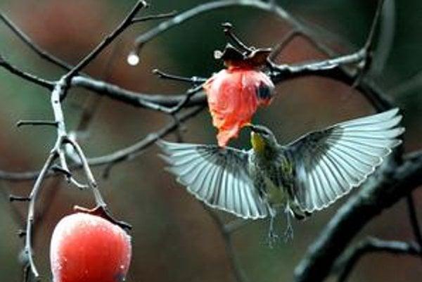 Kolibrík.