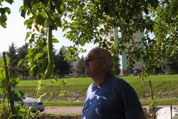 Indické uhorky pestujú aj na strome.