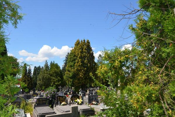 Hlavný mestský cintorín. So skúmaním zdravia drevín sa začne práve tu.