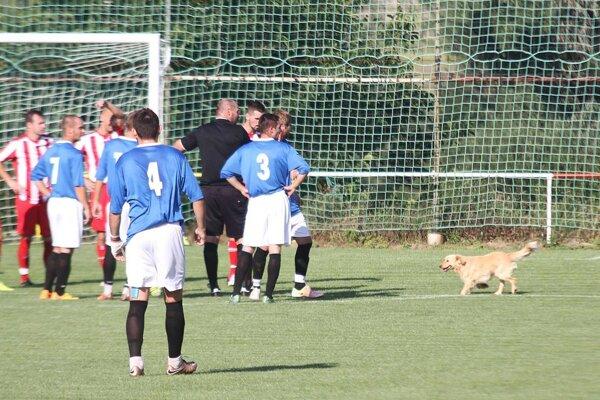 Kuriozitou prvého polčasu zápasu v Báber bol príchod štvornohého návštevníka.