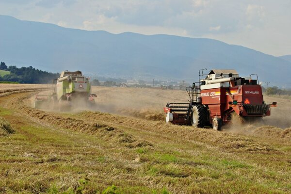 V Sklabini tento rok zbierajú len ozimnú pšenicu.