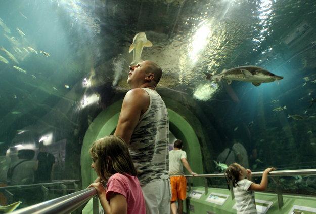 Najväčšie sladkovodné akvárium v strednej Európe v ekocentre pri jazere Tisza.
