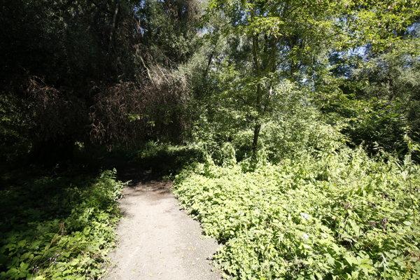 Bojnický park vyzerá miestami ako prales.