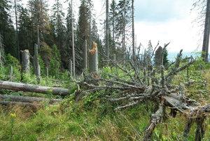 Kotlina pod Babou horou. Od kalamity v roku 2004 ležia na zemi stovky stromov.