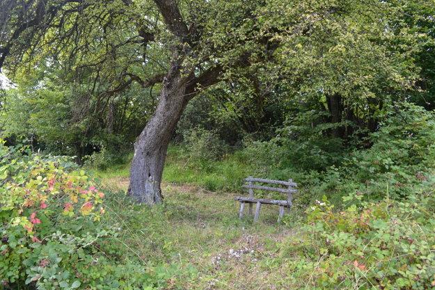 Miesto pod jabloňou, kde podľa príbehov písala Timrava svoje diela.