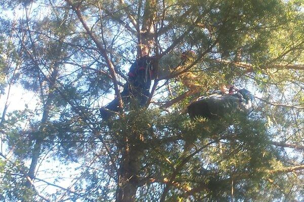 Hasič zachraňaje paraglidistku v patnásťmetrovej výške.