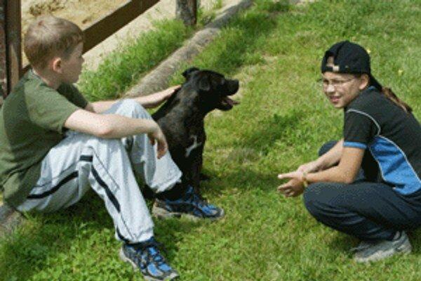 Na dani zo psa vyzbiera mesto každoročne okolo 28-tisíc eur.