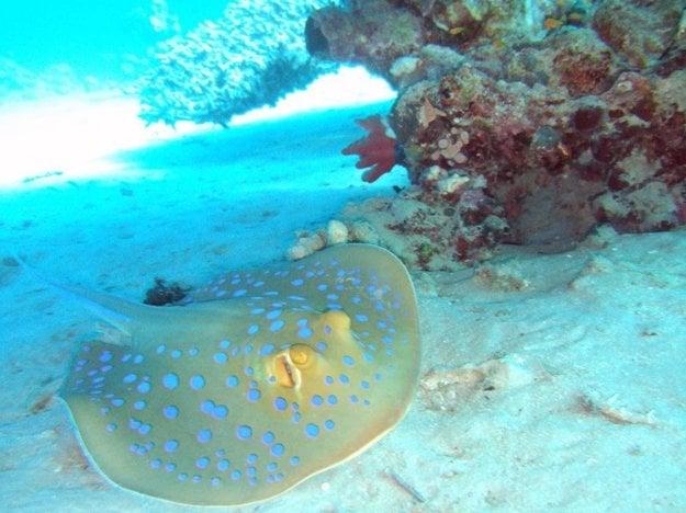 Podmorský svet Červeného mora láka potápačov z celého sveta.