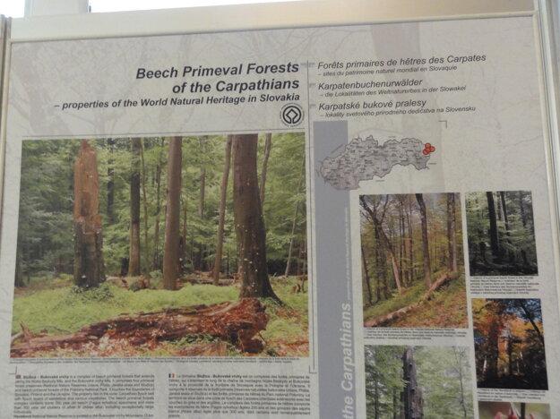 V zozname sú už unikátne staré bukové pralesy v Karpatskom oblúku.