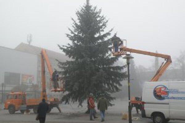 V centre Prievidze stromček na rozsvietenie chystali už minulý týždeň.