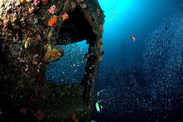 Podmorské vraky sa stali príbytkom pestrého života.