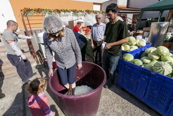 ministerka pôdohospodárstva a rozvoja vidieka SR Gabriela Matečná šliape kapustu počas návštevy 20. ročníka festivalu Dni zelá v Stupave.