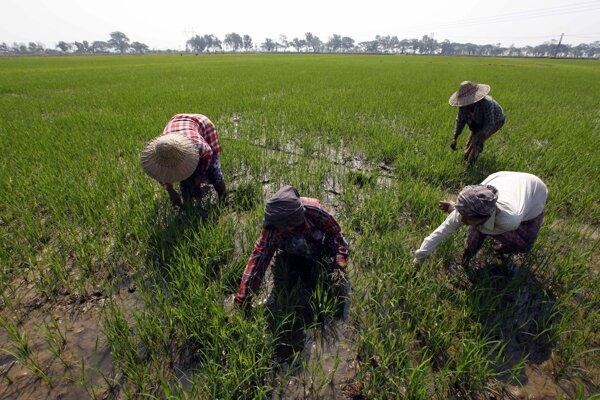 Najväčší dopyt po nových pracovníkoch je v poľnohospodárstve.