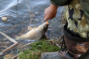 Medzi rybármi sú aj pytliaci.