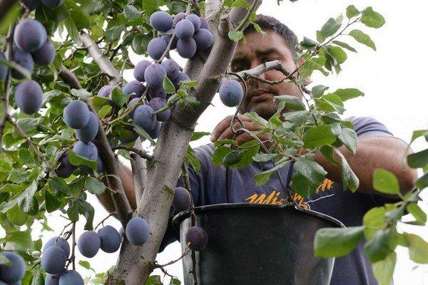 Rastie záujem o potraviny od drobných pestovateľov.