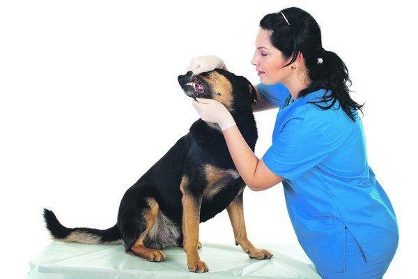 Ak ste pes alebo mačka, dlhé objednávacie lehoty na odborné vyšetrenia a čakanie na výsledky sa vás netýkajú.