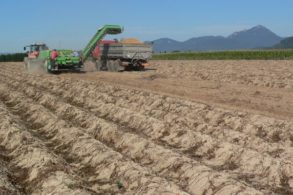 Zber úrod zpolí azo sadov oproti iným rokom trval vtomto vegetačnom období očosi kratšie aj vLiptove.