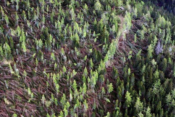 Polámané stromy po veternej smršti.