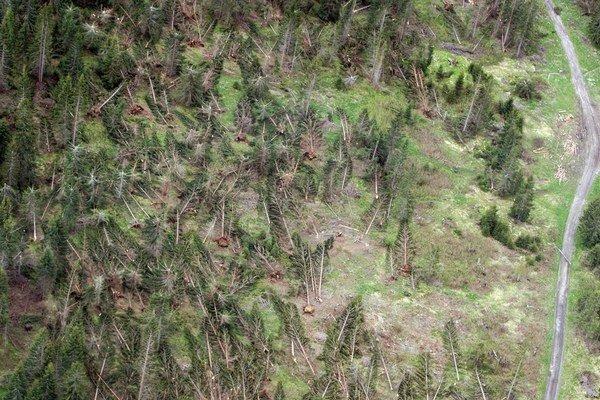 Mnohé stromy vyvalil silný vietor aj s koreňmi.