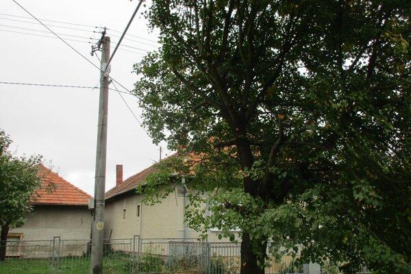 Opílenie starých stromov prispôsobili tvaru nezvyčajne dlhých  nosníkov svietidiel.