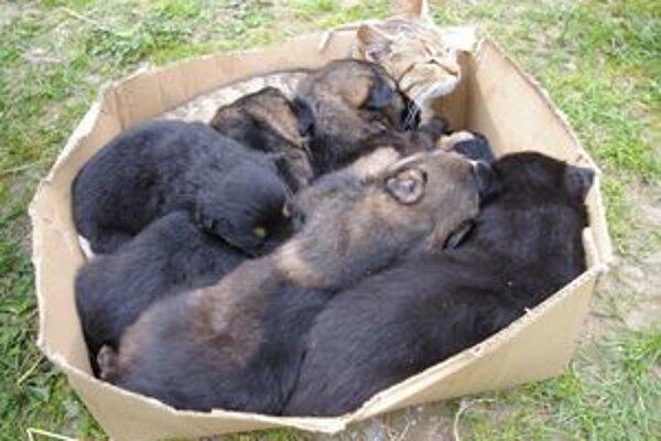 Ľudia nechcené psíky často nechajú v krabici na ulici.