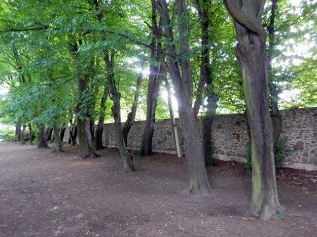 V Kolmanovej záhrada sú vzácne dreviny.