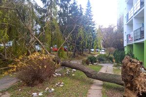 Vyvrátený strom na Zakarpatskej ulici vRožňave.