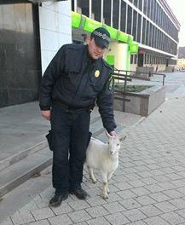 Pre kozu v centre zalarmovali Žiarčania mestskú políciu.