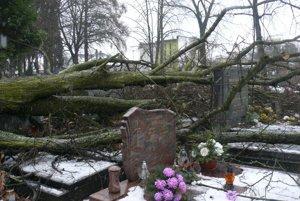 Pováľané stromy na cintoríne.
