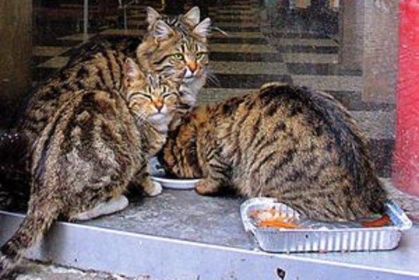 Niektorí ľudia túlavým mačkám na ulicu prinášajú potravu.