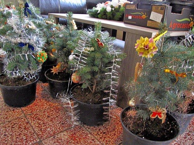 Stromčeky bezdomovci aj ozdobili.