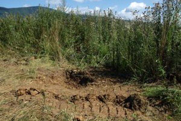Vrah telo mladej ženy zakopal v provizórnom hrobe neďaleko Nitrice.