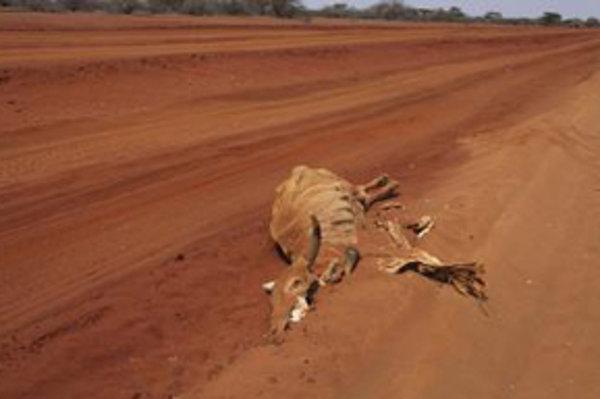 Desať miliónov ľudí, žijúcich v krajinách Afrického rohu, postihli najhoršie suchá za posledných 60 rokov.