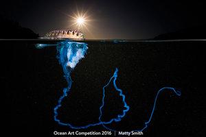 Mechúrovník tichomorský, ktorého vyplavilo pri pobreží austrálskeho zálivu Bushrangers.