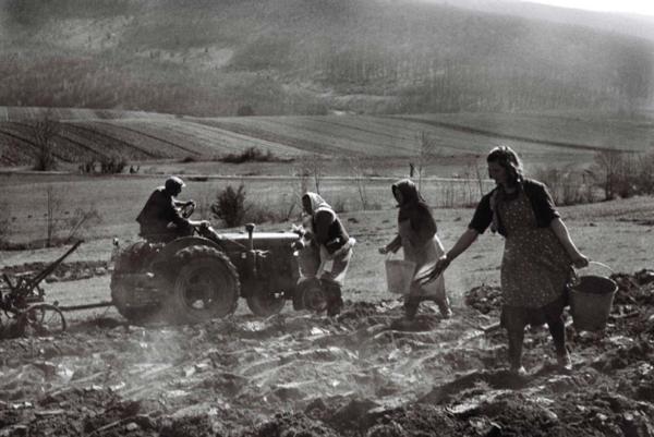 Ženy z Hradišťa zbierajú kamene. Prvá je Darina Hroncová, druhá Margita Kováčová. Práce prebiehajú pravdepodobne Pod hrbom.