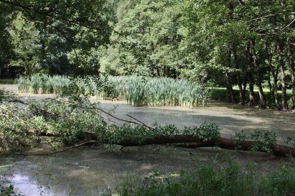 Jazierko v parku. V roku 2015 doňho spadol strom.