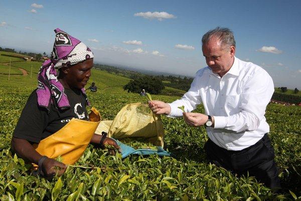 Prezident Slovenskej republiky Andrej Kiska pri zbere čaju na plantáži pri Nairobi.