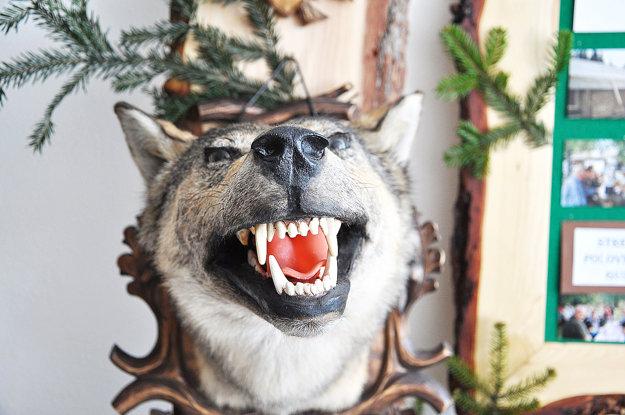 Trofej vlka.